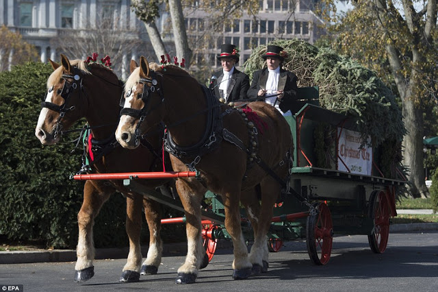 US First Lady,Michelle Obama Takes Delivery of Christmas Tree for the White House