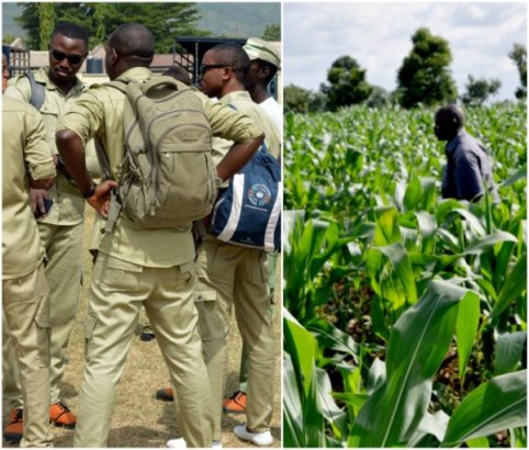 30 corps members to redo service year, NYSC members to be posted to farms