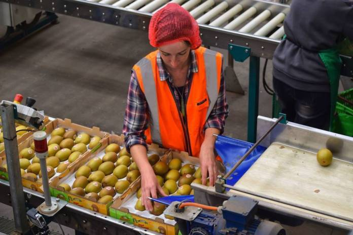 Massive Fruit Picking, Thinning, Pruning, Packing Job Vacancy in Australia 2019 – Apply Now