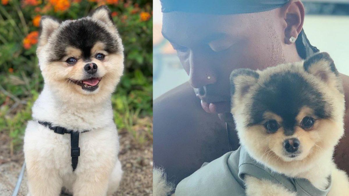daniel sturridge dog stolen